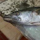 Spanish Mackerel is one of many fish you can purchase at the Galeria Alameda