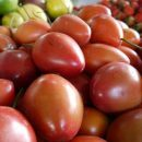 tamarillo can be purchased at the Galeria de Alameda in Cali