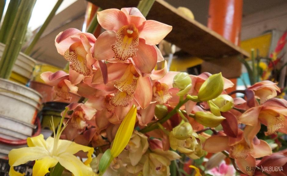 Cali Galeria Alameda ha una buona varietà di fiori