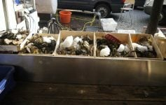 You can get fresh oysters in Amserdam at Noordermarkt on Saturdays