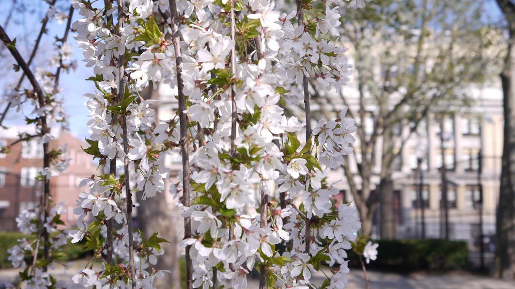 Hoboken Church Square Park Primavera