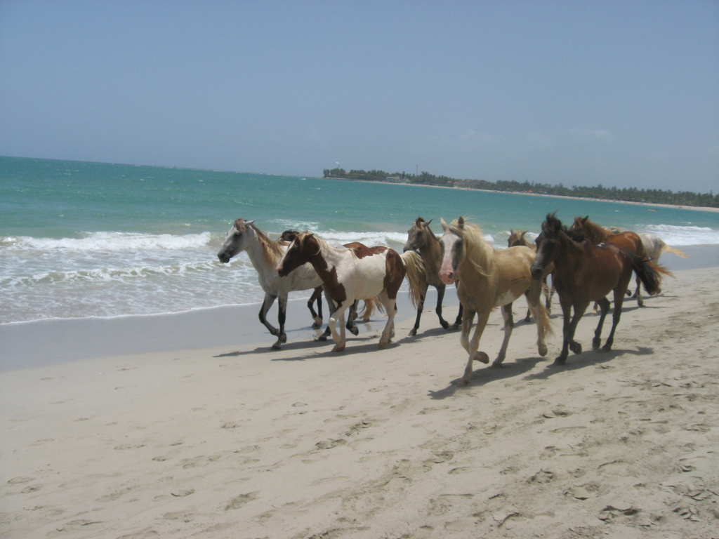 Horses in Dominican Republic Beach