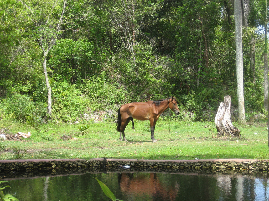 Skinny horse on a rope next to water