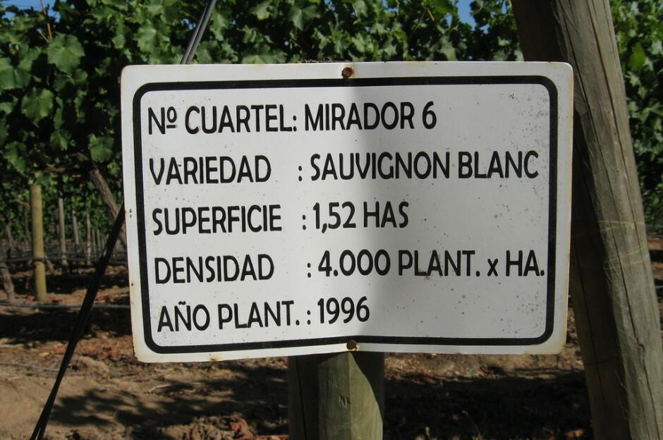 Sauvignon Blanc Trauben Casablanca Vineyards Chile