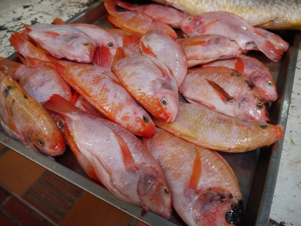 Fish that is found in the Atlantic Coast