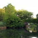 Bridge in the Pond in Central Park