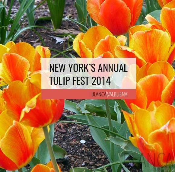 New York's Annual Tulip Fest 2014