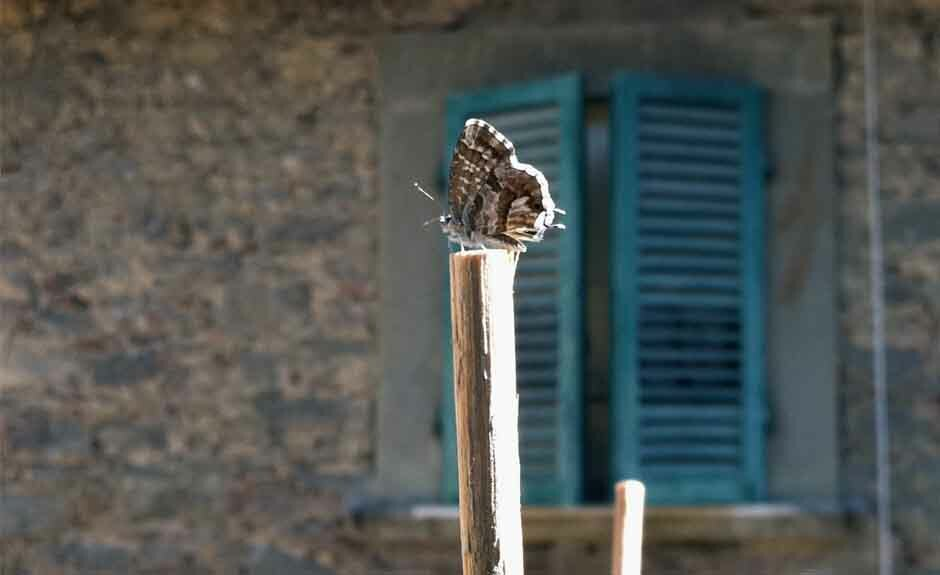 Moth found in Cortona Italy