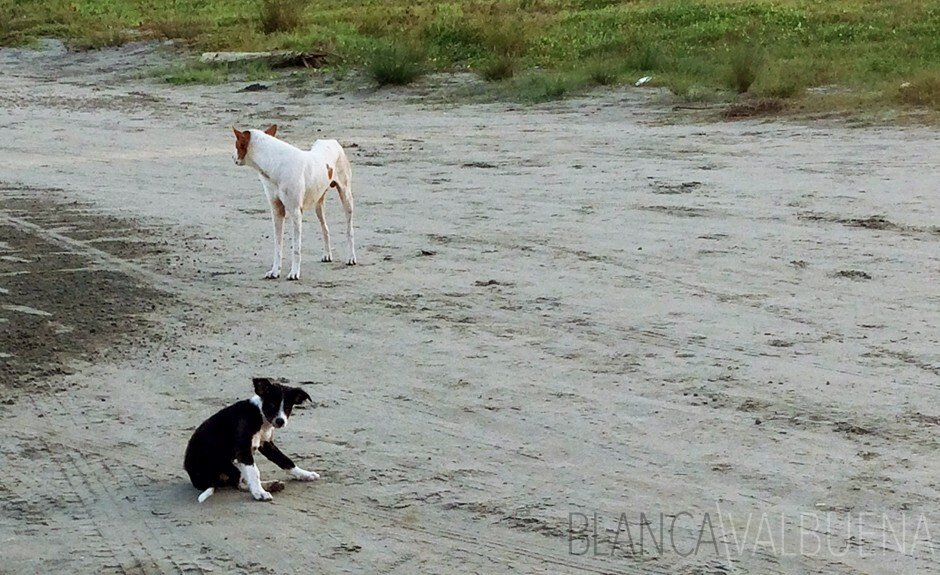 You should expect stray dogs on Cartagena's beaches