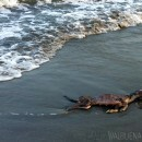A dead dog in the beach in cartagena