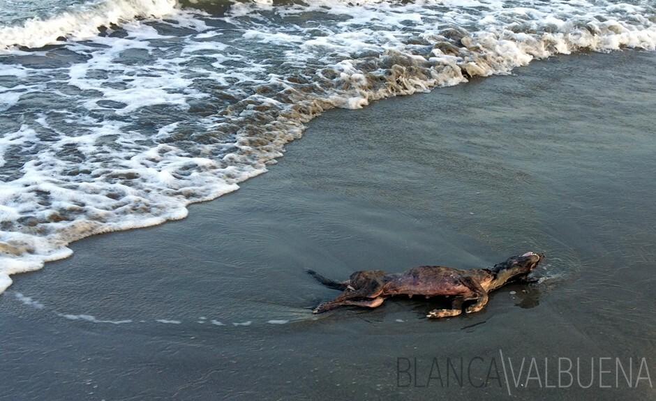 Un perro muerto en la playa en Cartagena
