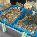 Great seafood at the Blois farmer's market