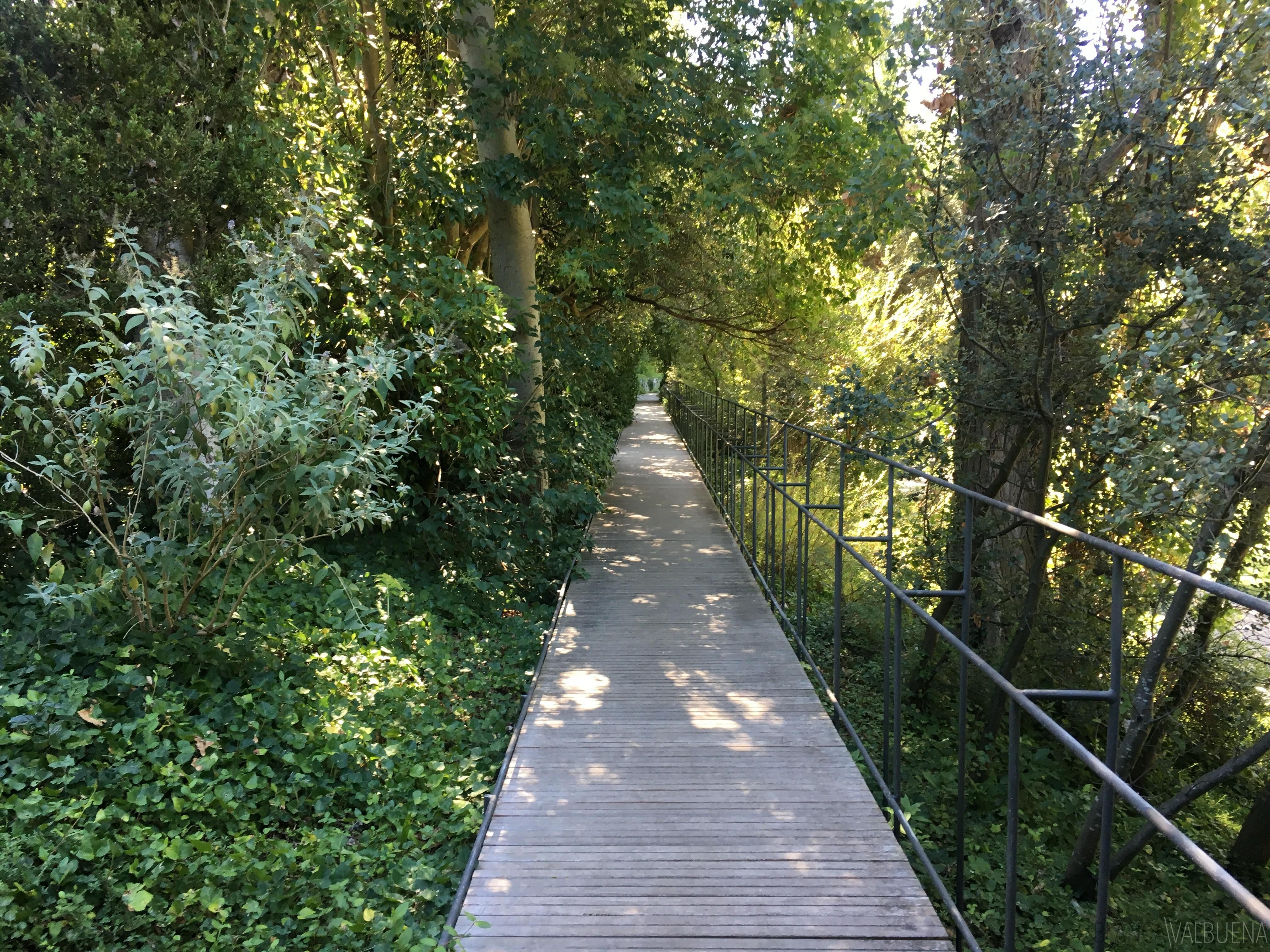 Gulbenkian Park has tons of secret spots and passageways
