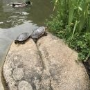 Turtles delight children at the Gulbenkian Park