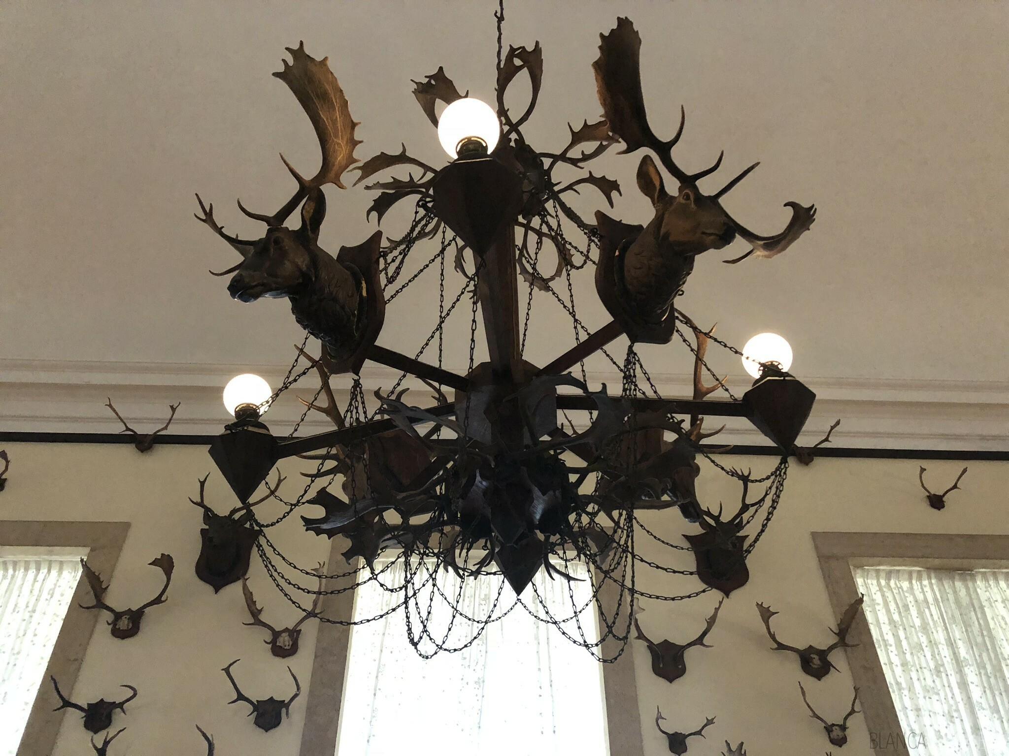 Palacio de Mafra's hunting trophy history
