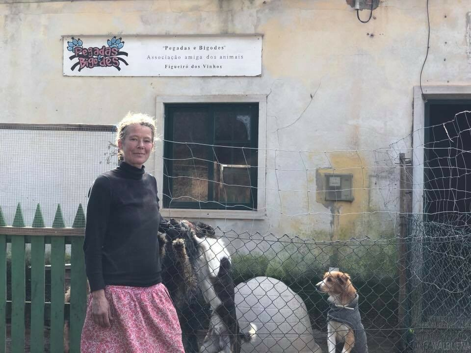 You can adopt dogs at many dog shelters in Portugal