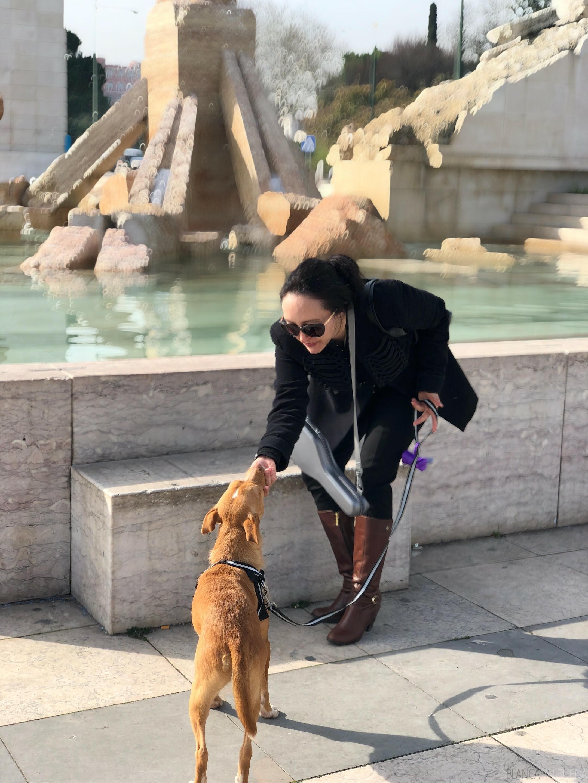 cute dog in portugal
