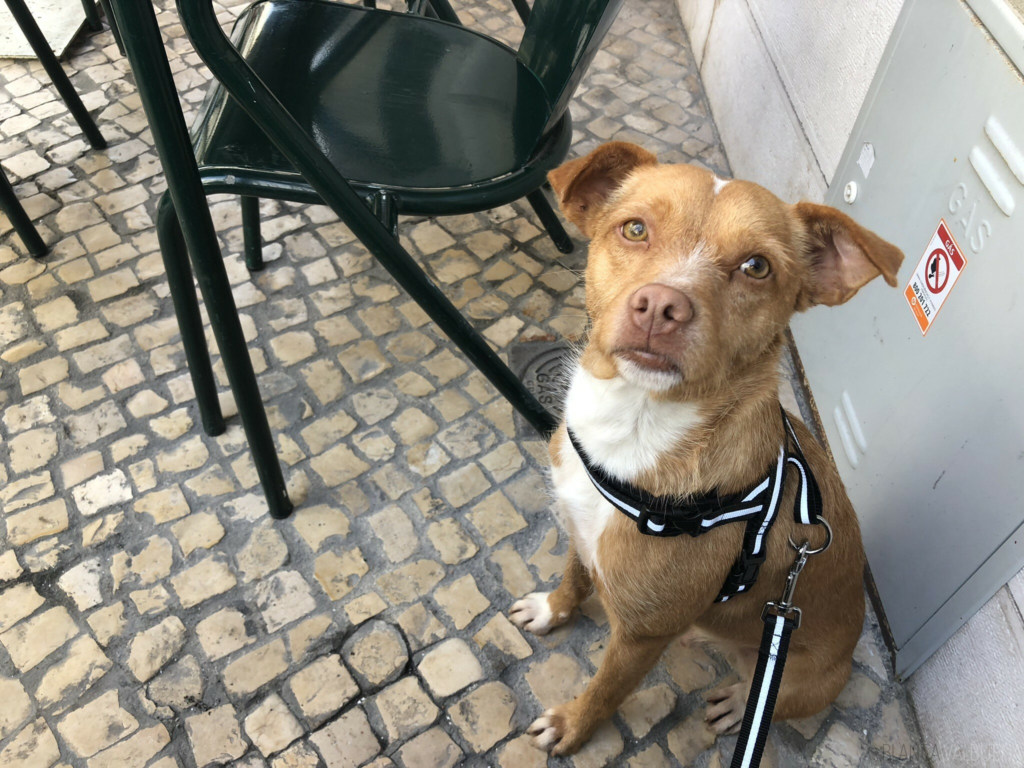 Are dogs allowed in restaurants in Portugal