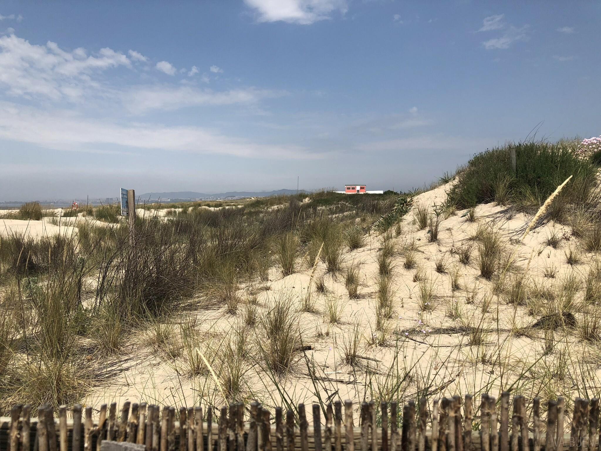 Dog friendly beach near Lisbon