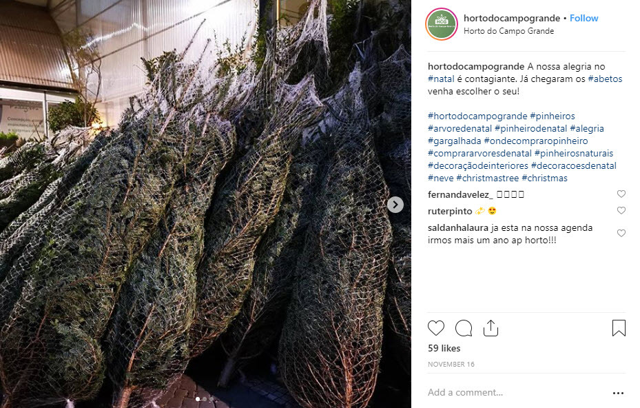 Buy a real Christmas tree at Horto do Campo Grande