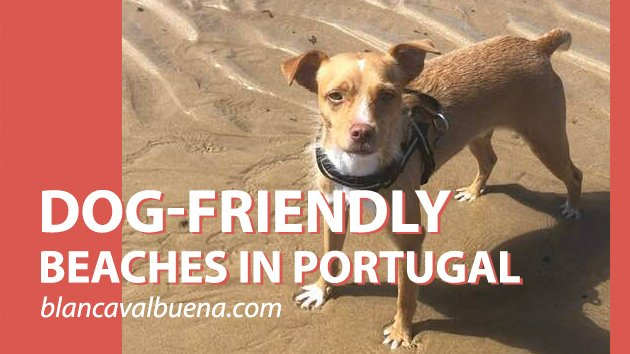 Can you bring dogs to the beach in Portugal
