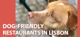 Restaurants where you can bring your dog in Lisbon
