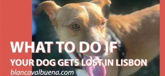 How to find a lost dog in Lisbon