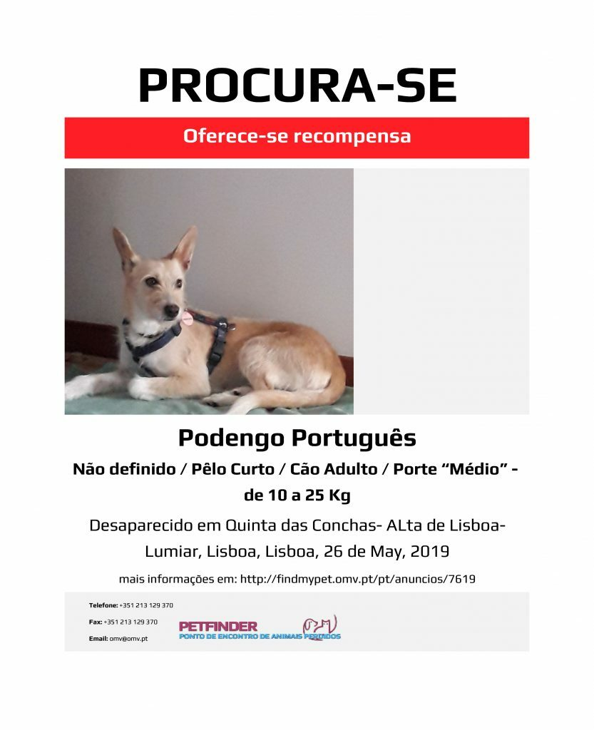 This is a sample lost dog notice from the PetFinder website. If you haven't learned Portuguese yet, this will be a good starting guide for you to follow.